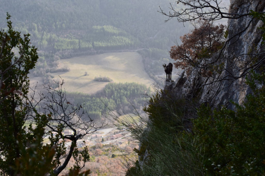 Escalade, canyoning, Via-ferrata avec VERTICAL SENSATION à LYON (69)
